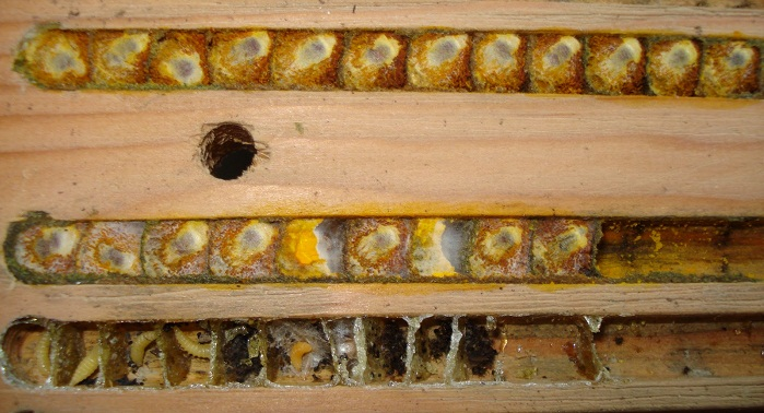 bee cells