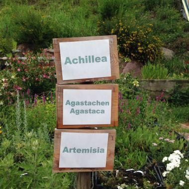 Pflegerhof - Achillea