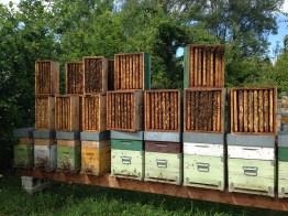 Raccolta Miele - Melari Sono Stati tolti dagli Alveari