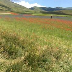Castelluccio di Norcia - I Fiori e le Colline