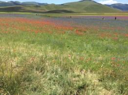 Castelluccio di Norcia - Persone tra i fiori