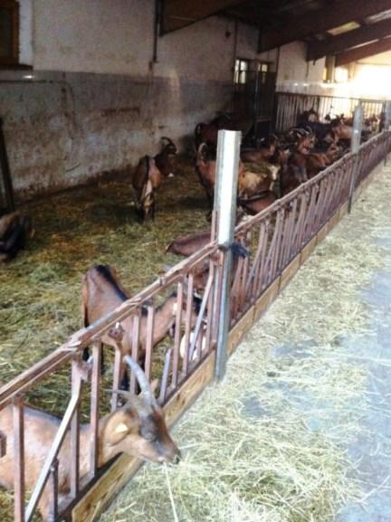 Stalla capre San Faustino