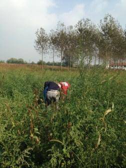 Agricola Cassani - Tentativo di Raccolta