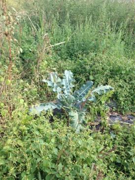 Agricola Cassani - Vegetazione