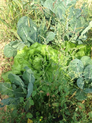 Agricola Cassani - Verdure da Cogliere