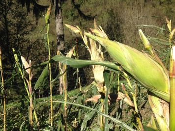 Agriturismo Prestello - Pannocchia Verde