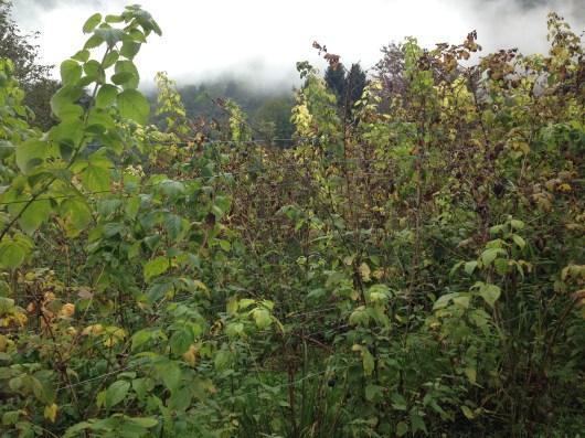 Non Solo Piccoli Frutti - Le Coltivazioni 3