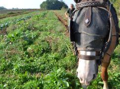 Zaffaroni Domenico - Cavallo che Lavora Orto