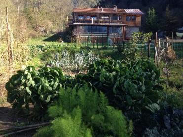 Agriturismo Prestello - Casa vista del Cavolini di Bruxelles