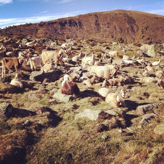 Azienda Agricola Prestello - Bionda dell'Adamello In Malga al 2 Novembre