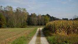 Roppolo Buon Cammino - Strada di Campagna