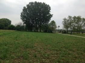 Erbadigh Grano Saraceno - Il Campo Sotto Albero