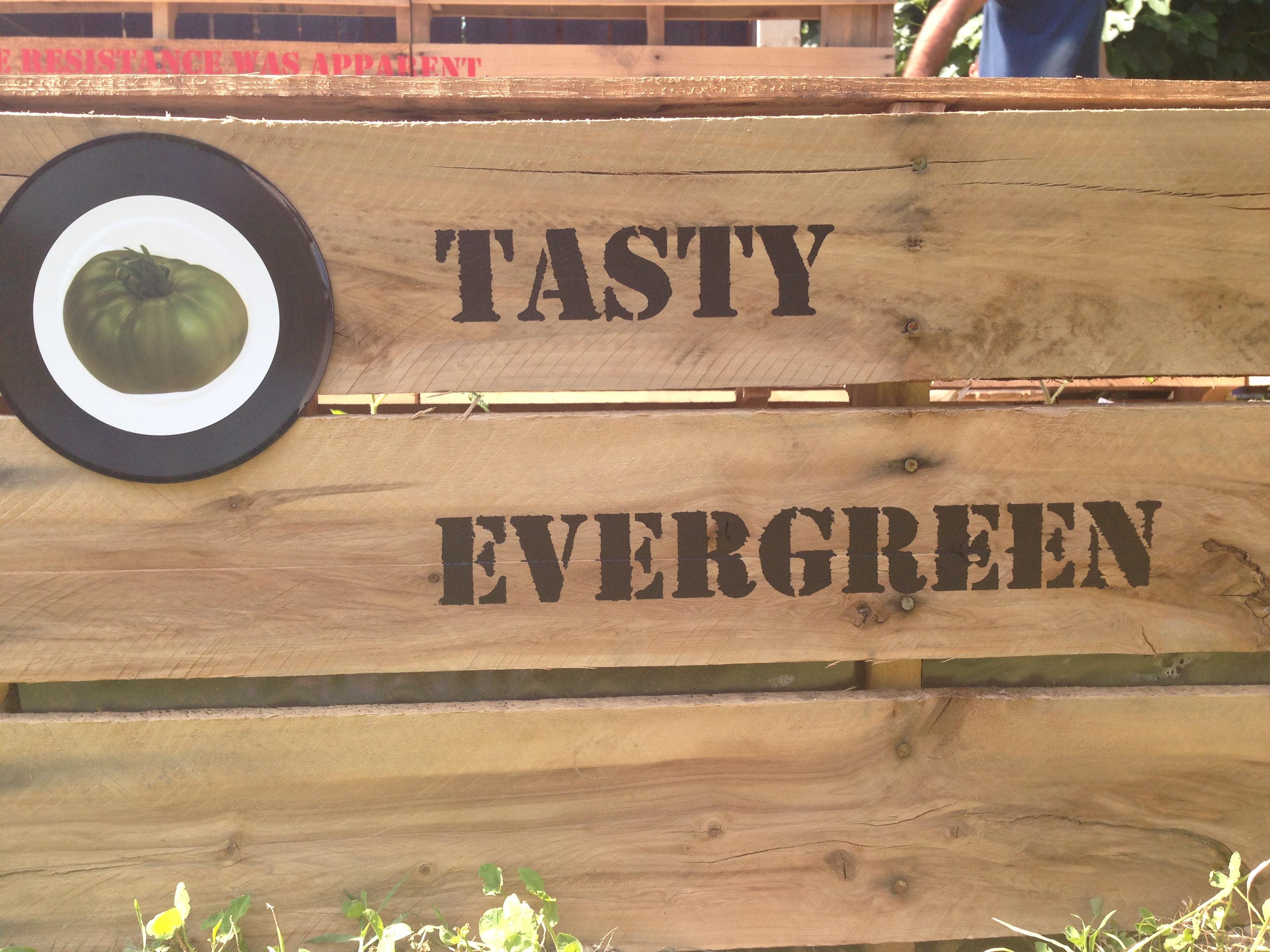 Exponymi - Pomodori Tasty Evergreen
