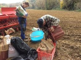 Monococco in Umbria - Il Riuso di Pacchi per Spostare i Semi