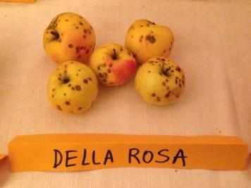 Agricola Solan - Mela Della Rosa