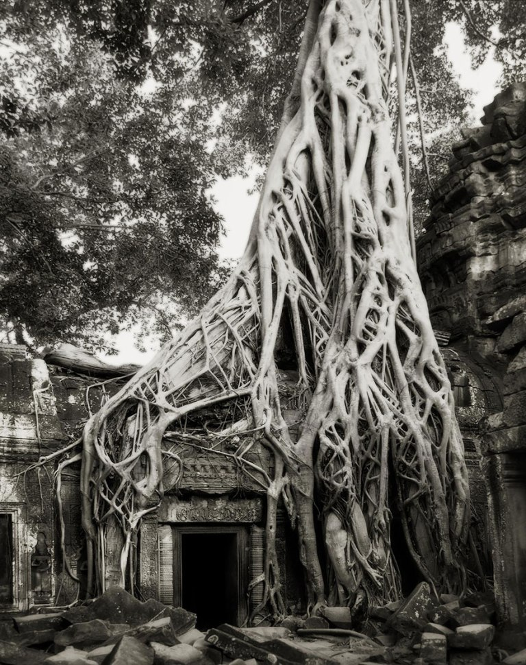 ancient-trees-beth-moon-13