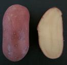 patatina-rossa-a-pasta-gialla