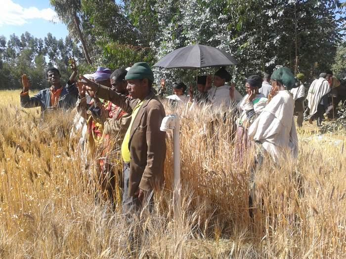 Quanto è locale il locale etiope?