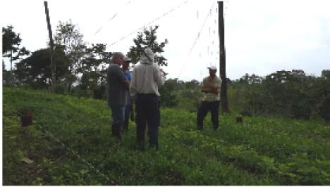 Personal de Corfoga , MAG y CICA en Sesión de trabajo de transferencia tecnológica de pastoreo por franjas.