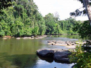 rivière Corantijn au Suriname 3