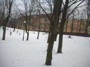 w-zimowym-parku