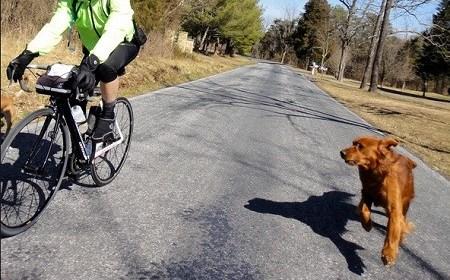 ciclista inseguito da un cane