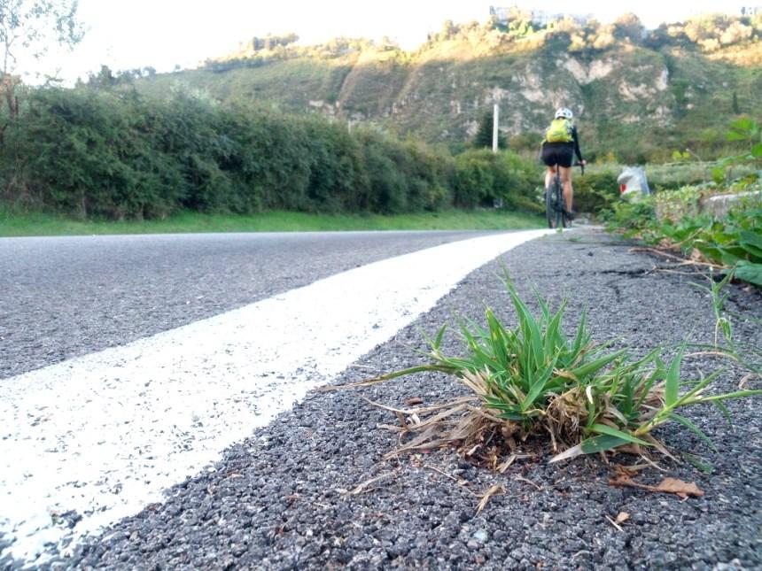 il ciuffo d'erba sull'asfalto