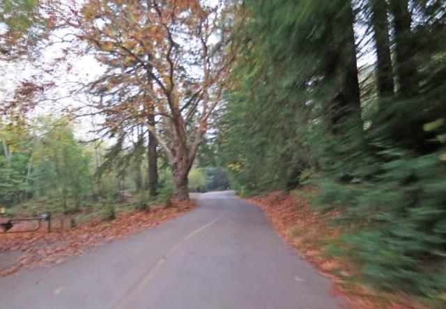 redwood02