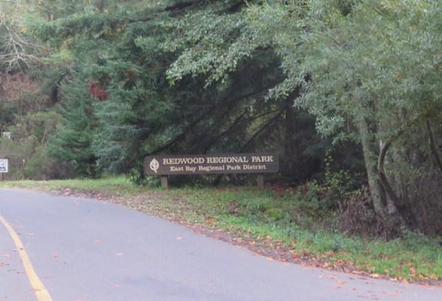 redwood03