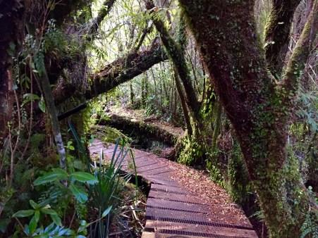 Senda do Tepual no Parque Nacional Chiloé