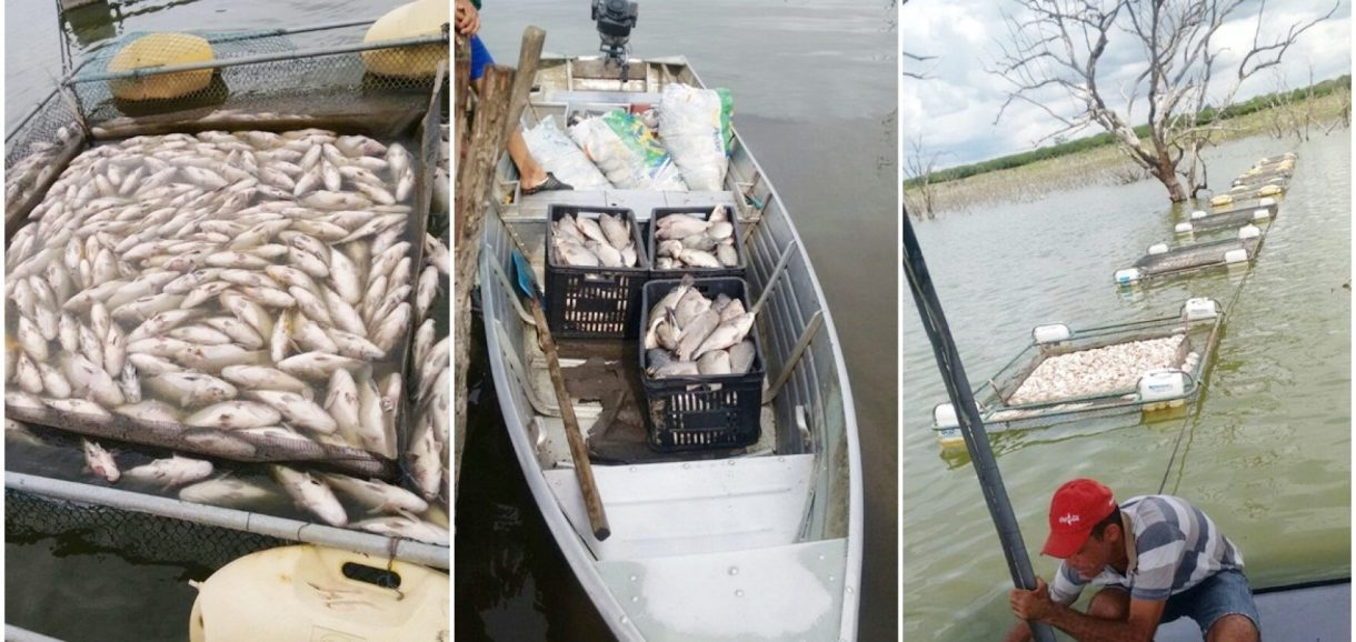 FRANCISCO MACEDO   17 toneladas de peixe morrem na barragem do Estreito e deixa prejuízo de R$ 200 mil
