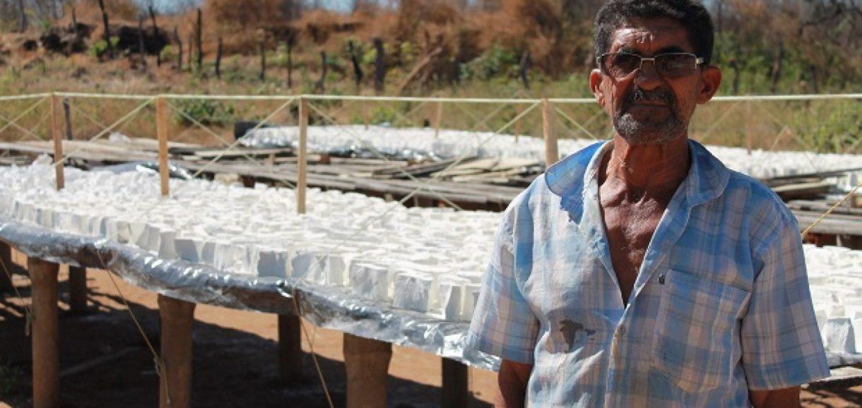"""""""Ouro branco"""" de Santana do Piauí: Produção de Goma e farinha movimentam a economia local"""