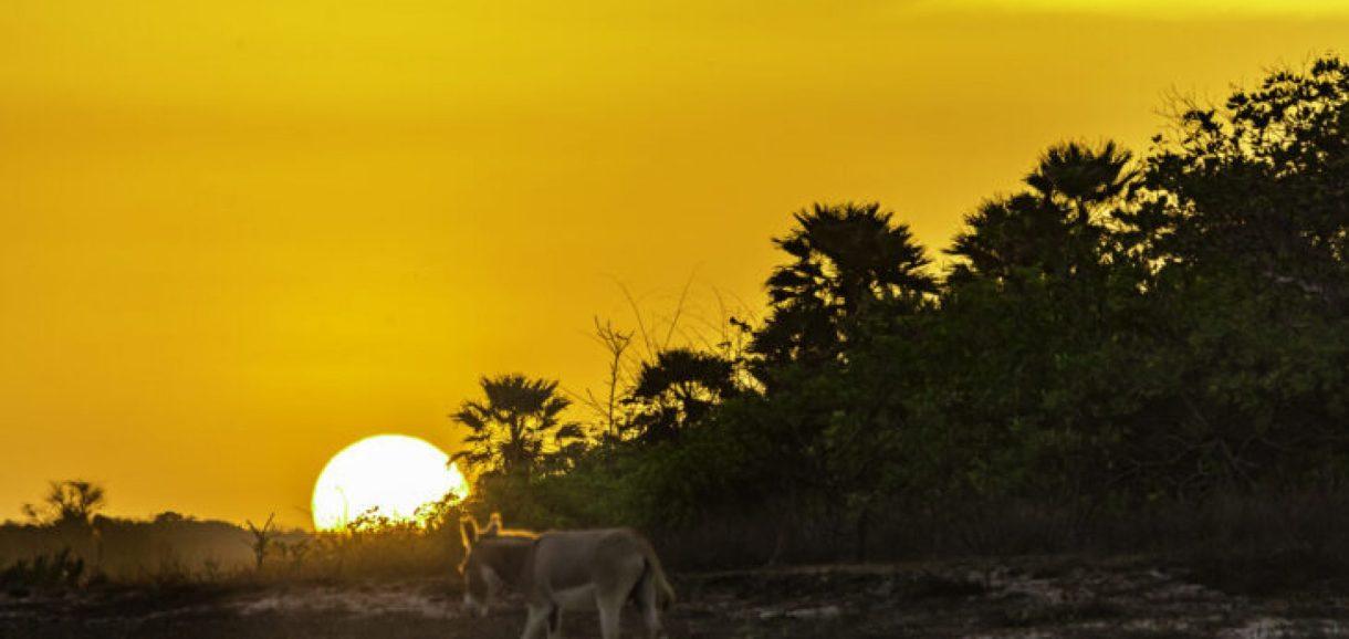 Piauí terá temperaturas acima de 40°C e umidade de deserto nos próximos dias