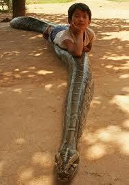 Niño jugando con anaconda