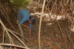 ciencia de cuba_ciencia cubana_manglares de cuba_santiago de cuba_III Taller Regional de Formación de Capacidades para el Manejo Costero (18)
