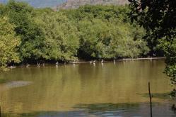 ciencia de cuba_ciencia cubana_manglares de cuba_santiago de cuba_III Taller Regional de Formación de Capacidades para el Manejo Costero (19)