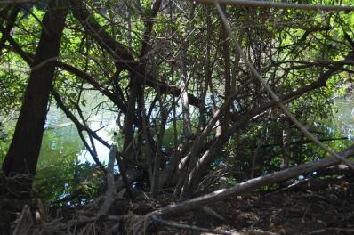 ciencia de cuba_ciencia cubana_manglares de cuba_santiago de cuba_III Taller Regional de Formación de Capacidades para el Manejo Costero (2)