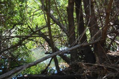 ciencia de cuba_ciencia cubana_manglares de cuba_santiago de cuba_III Taller Regional de Formación de Capacidades para el Manejo Costero (3)