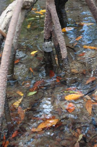 ciencia de cuba_ciencia cubana_manglares de cuba_santiago de cuba_III Taller Regional de Formación de Capacidades para el Manejo Costero (37)