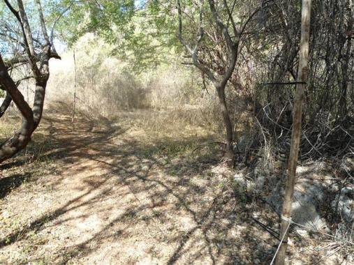 ciencia de cuba_ciencia cubana_anillamiento de aves en cuba_estación ecológica siboney juticí (3)