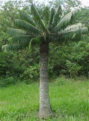 ciencia de cuba_ciencia cubana_plantas de cuba
