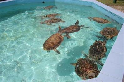 ciencia de cuba_portal de la ciencia cubana_acuario de santiago de cuba_parque baconao_área protegida