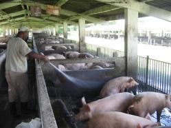 ciencia de cuba_portal de la ciencia cubana_uso del biogas en fincas agropecuarias (9)
