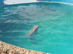ciencia de cuba_portal de la ciencia cubana_acuario de baconao_reserva de la biosfera baconao (5)