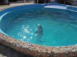 ciencia de cuba_portal de la ciencia cubana_acuario de baconao_reserva de la biosfera baconao (6)