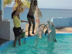 ciencia de cuba_portal de la ciencia cubana_acuario de baconao_reserva de la biosfera baconao (9)
