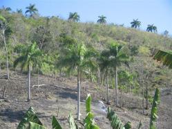 ciencia de cuba_portal de la ciencia cubana_protección de especies cinegéticas (18)