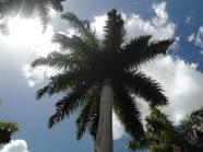 ciencia de cuba_portal de la ciencia cubana_protección de especies cinegéticas (2)