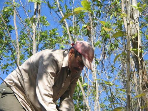 ciencia de cuba_portal de la ciencia cubana_protección de especies cinegéticas (23)