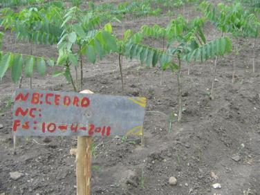 ciencia de cuba_portal de la ciencia cubana_protección de especies cinegéticas (36)